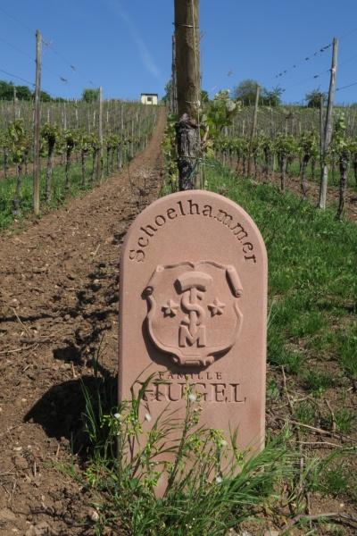Hugel vineyard