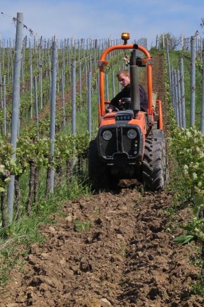ploughing between rows