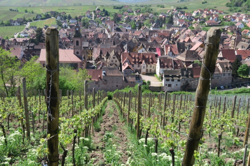 view down to Riquewihr
