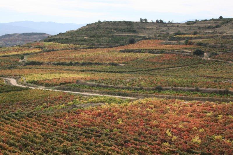 hillside at Bai Gorri