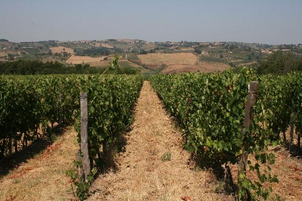 Casa Sola vineyard
