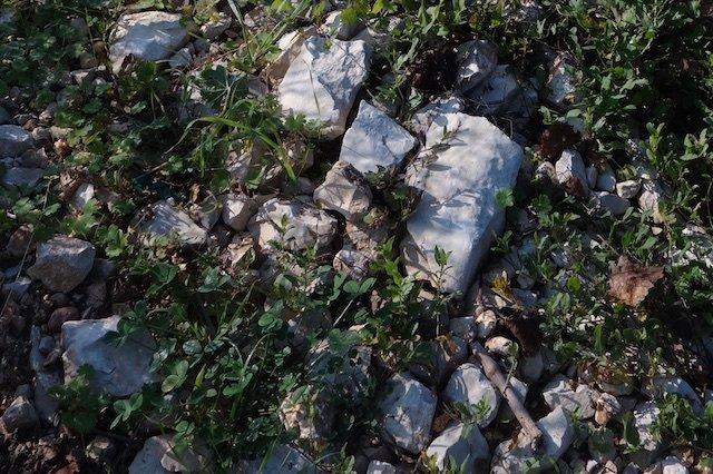 Limestone soil