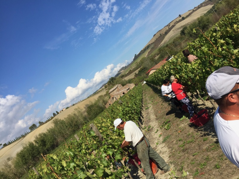 Contucci harvest sky