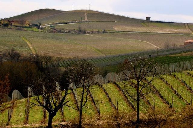 Vineyards outside of Barolo village