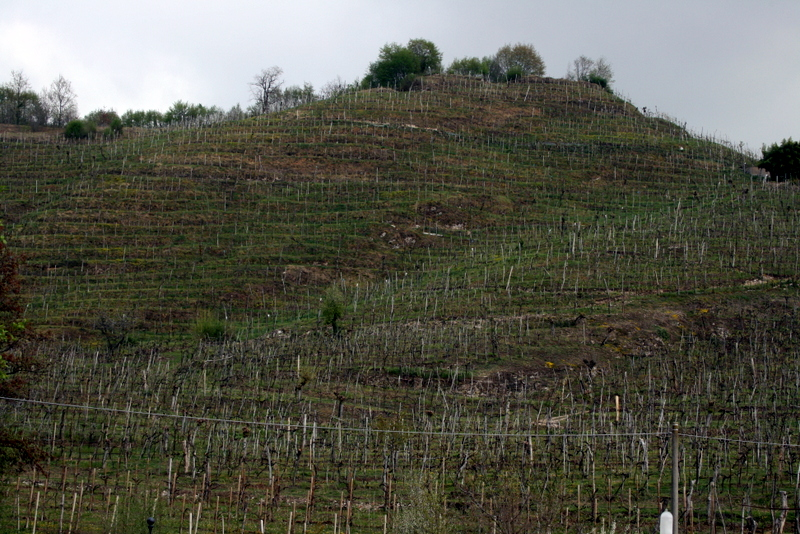 Merotto vineyard