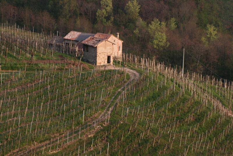 San Pietro vineyard