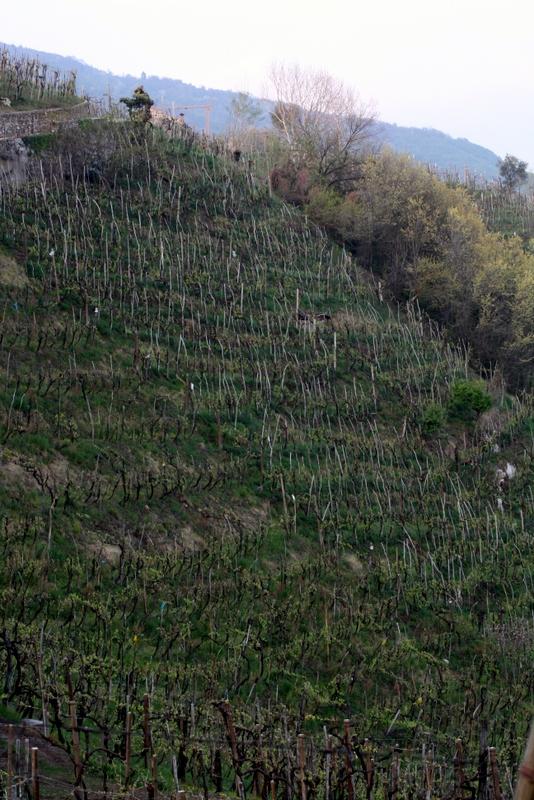 steep Cartizze vineyard