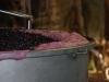 Merlot fermenting