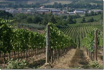 Lower vineyard and Pontassieve