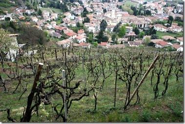 Rive di San Floriano vineyard