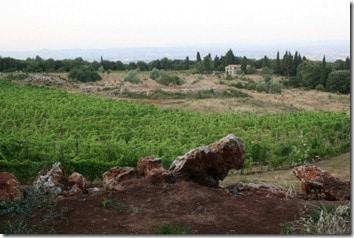 Triassic vineyard