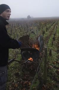 Pruning at Pichon